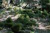 Mossy Rocks - Uvas Canyon #4088