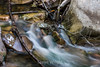 Swanson Creek - Uvas Canyon Park #4056