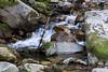 Swanson Creek - Uvas Canyon Park #3541