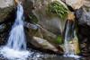 Swanson Creek - Uvas Canyon Park #3603