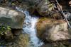 Swanson Creek - Uvas Canyon Park #3757