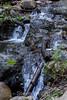Swanson Creek - Uvas Canyon Park #3722