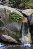 Swanson Creek - Uvas Canyon Park #3594