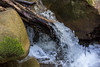 Swanson Creek - Uvas Canyon Park #3771