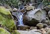 Swanson Creek - Uvas Canyon Park #3742