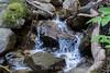 Swanson Creek - Uvas Canyon Park #3735