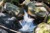 Swanson Creek - Uvas Canyon Park #3775