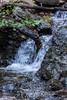 Swanson Creek - Uvas Canyon Park #3727