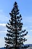 Tree - Yosemite #0048