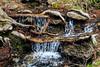 Stream - Yosemite #0033