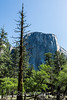 El Capitan - Yosemite #2089