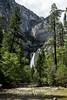 Yosemite Falls - Yosemite #1979