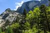 Half Dome - Yosemite #0519
