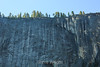 Maple leaves - Yosemite #0840