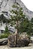 Boulder - Yosemite #1304