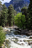 Merced River - Yosemite #0626