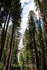 Yosemite Falls - Yosemite #0549