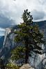 El Capitan - Yosemite #8646
