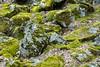 Mossy Rocks - Yosemite #8711