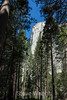 El Capitan - Yosemite #9069