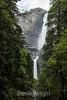 Yosemite Falls - Yosemite #8278