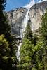 Yosemite Falls - Yosemite #9428