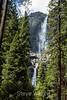 Yosemite Falls - Yosemite #9413