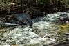 Merced River - Yosemite #8922