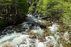 Merced River - Yosemite #8902