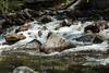 Merced River - Yosemite #8930