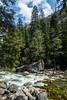Merced River - Yosemite #8919