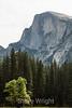 Half Dome - Yosemite #8874