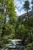 Merced River - Yosemite #8909