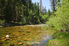 Merced River - Mariposa Grove (15)