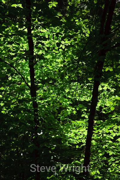 Leaves - Yosemite (9)