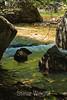 Merced River - Yosemite (37)