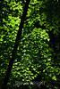 Leaves - Yosemite (10)