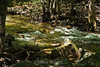 Merced River - Yosemite (27)