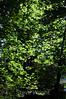 Leaves - Yosemite (14)