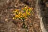 Flowers - Yosemite (2)