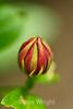 Flowers - Yosemite (4)