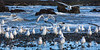 """Sea Gulls at Piedras Blancas"""