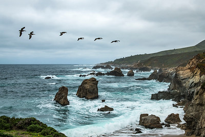 Pelicans in Big Sur