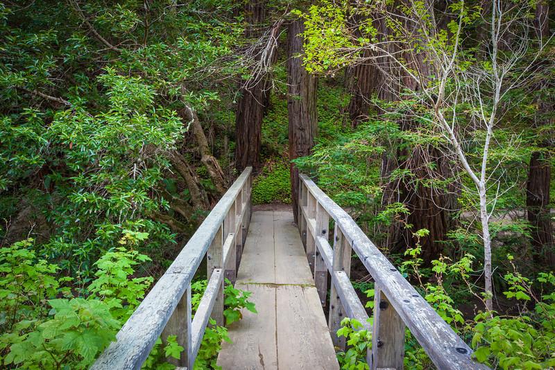 """""""Partington Cove Footbridge"""""""
