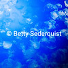 Moon Jellyfish, Monterey Aquarium