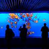 Sea Nettle Tank and Human Onlookers, Monterey Aquarium