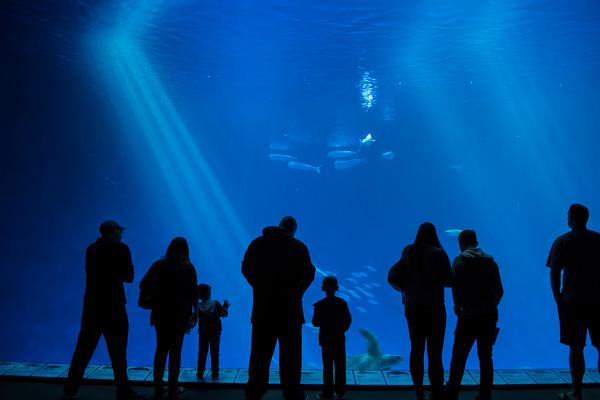Visitors at Open Sea Exhibit, Monterey Bay Aquarium