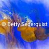 Jellyfish with Painterly Effects, Monterey Aquarium