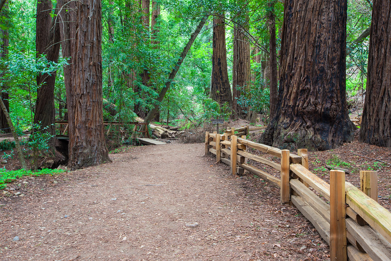 """Redwood Grove"""