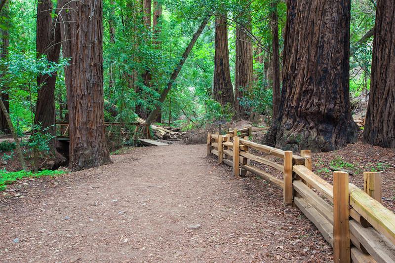 """Redwood Grove"""